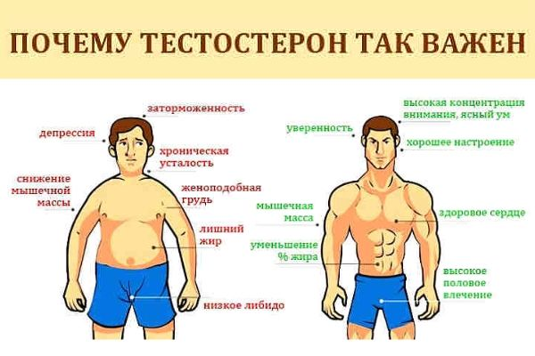зачем нужен тестостерон