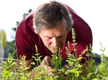 Какие травы при простатите наиболее эффективны
